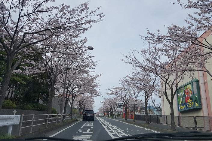 yoshiisakura